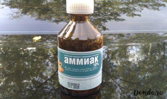 rastvor-ammiaka-foto