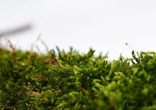 zelenyj-moh-v-teplice