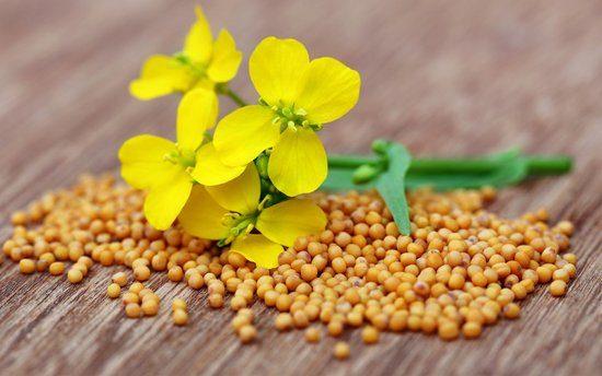 semena-gorchicy-cvetok